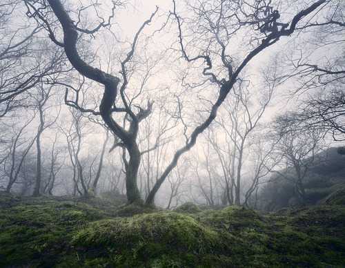 Enchanted Woodland by ~TristanCampbell on deviantART