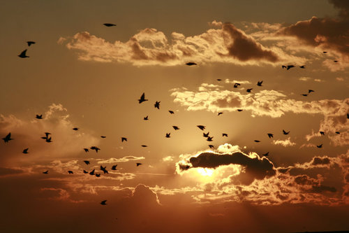 Winged_migration__by_tibiii-d4d7tq4_large