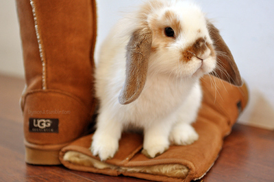 Boot-cute-rabbit-shoes-ugg-favim.com-69132_large