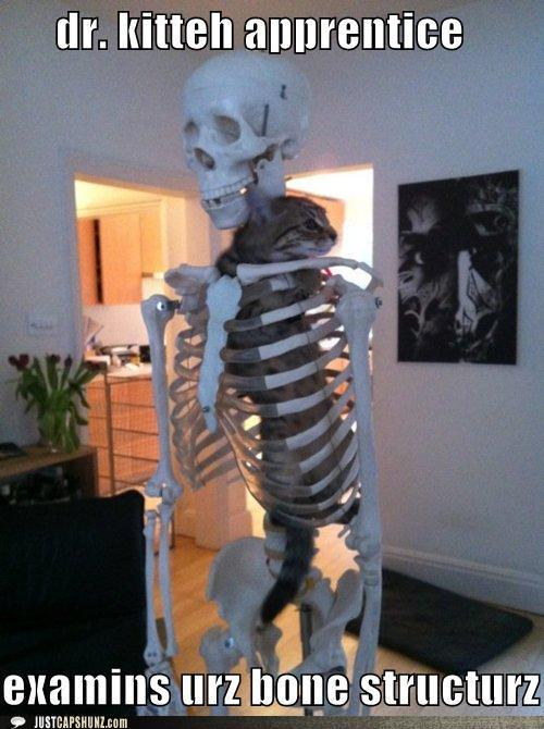 funny captions dr kitteh apprentice examins urz bone structurz large ...
