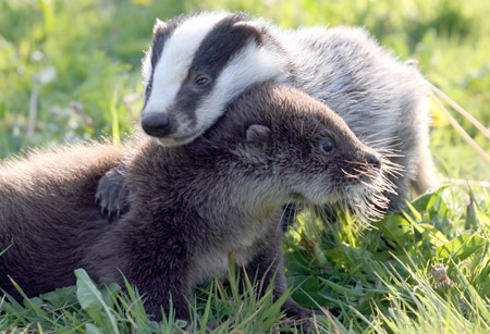 Unlikely-animal-friends-31_large