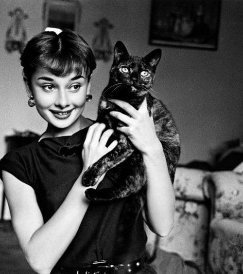 Audrey-audrey-hepburn-bampw-black-and-white-cat-favim.com-176538_large
