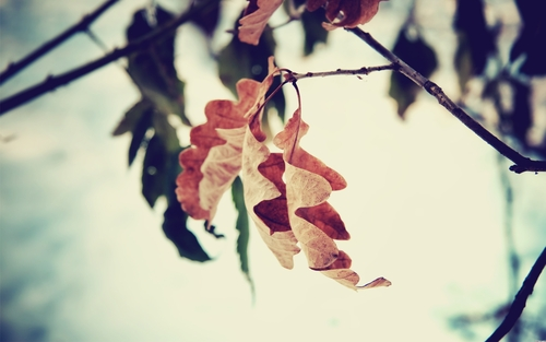 1305834173-nature-leaf-autumn-leaves-fall-branch-focus-wallpaper_large