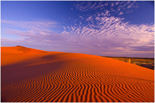 Simpsondesert_large