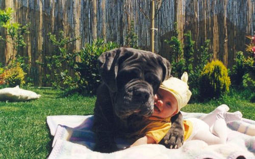 Big-dog-and-infant_large