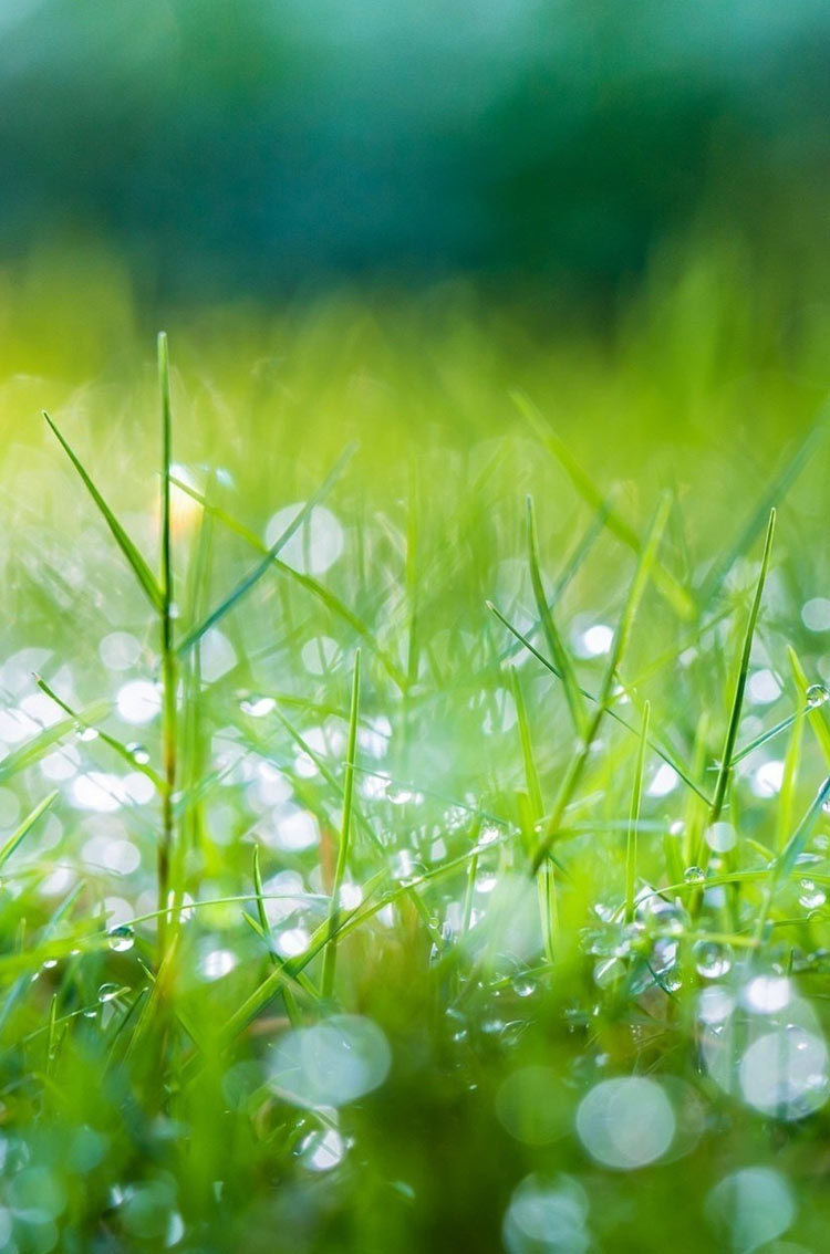 Morning dew Wallpaper Plants Nature Wallpapers in jpg format for