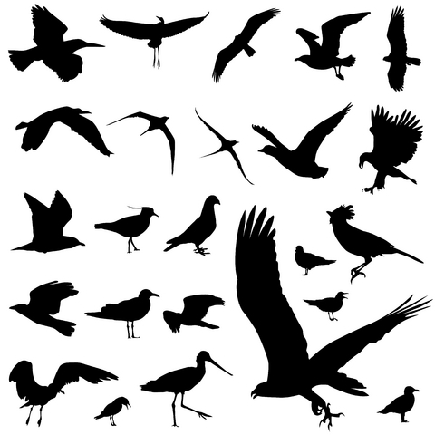 bird-tattoo-designs