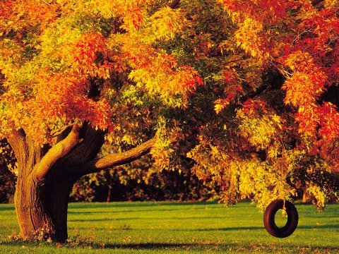 Trees-in-autumn_112319-480x360_large