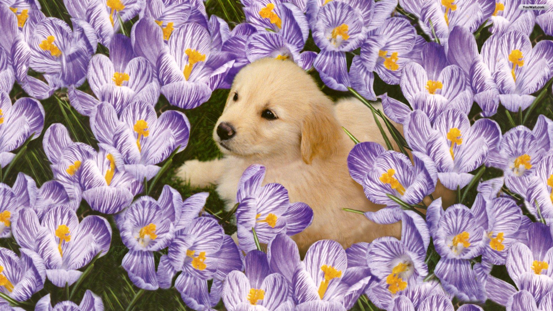 cute pics of flowers  wallpaper hd, Natural flower