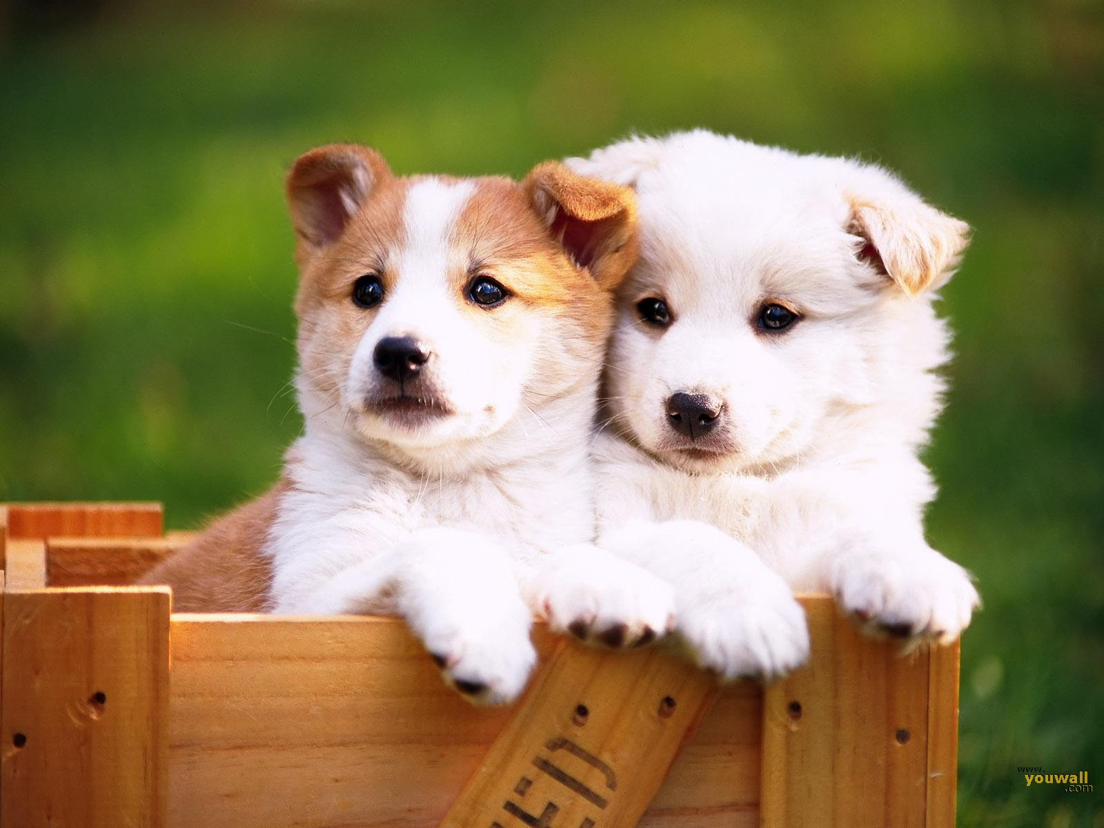 group of lovely small dog wallpapers
