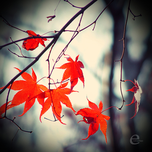 It__s_autumn__by_einfachso_large