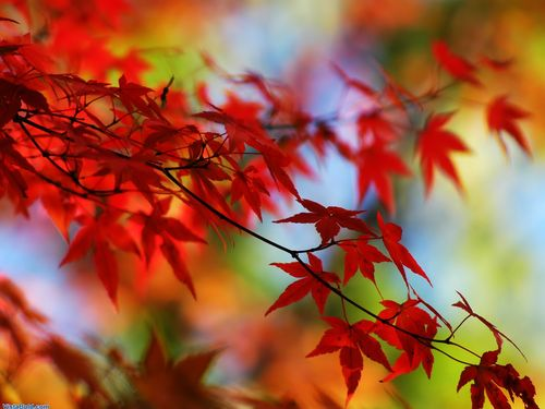 The-best-top-autumn-desktop-wallpapers-15_large