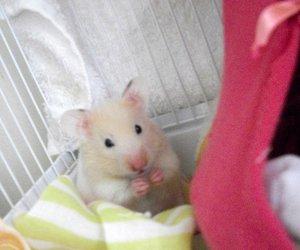 celina hamster cute fat