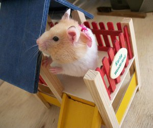 celina hamster cute play