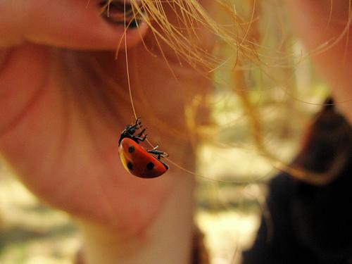 Observing Nature || ladybird ✿⊱╮