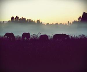 horses fog