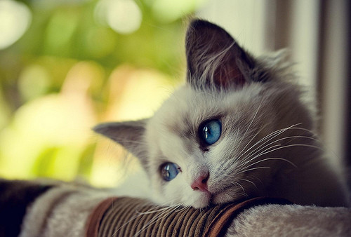 Cat,cute,photography,photo,bokeh,funny-06236f8063450bf3695d49df08fa672a_h_large