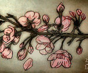 drawing cherry blossom