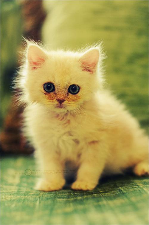 Cute_cat_by_silentpain0_large
