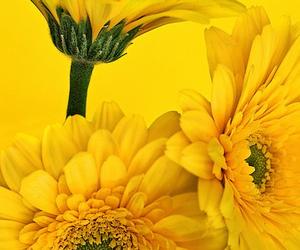 yellow \o/