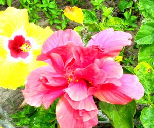flowers yellow pink green