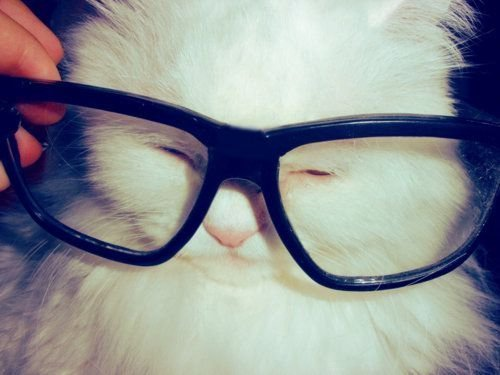 Cat-cute-glasses-haha-kitty-favim.com-205613_large