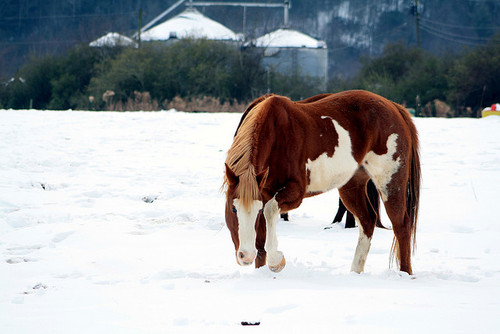 Horses 48/365 | Flickr - Photo Sharing!