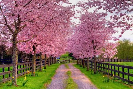 Pink Nature Wallpaper Desktop Nature Wallpaper on In