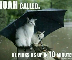 funny... cats