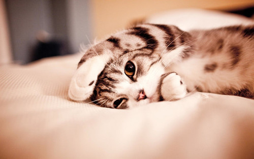 Cute,kitten,cat,cute,pillow,adorable,kitty-5b232c8ed6b31e22c645f7769af74229_h_large
