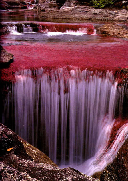 Rio-cano-cristales-river-of-five-colours-columbia-6_large