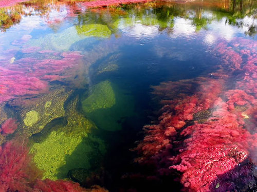 Rio-cano-cristales-river-of-five-colours-columbia-20_large
