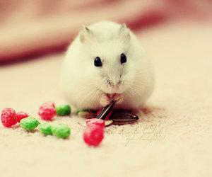 hamster animal cute sweet