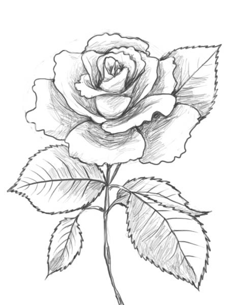 How To Draw A Rose Drawing Factory We Heart It
