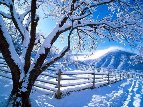 Christmas-winter-gallery-albums-wallpapers_large