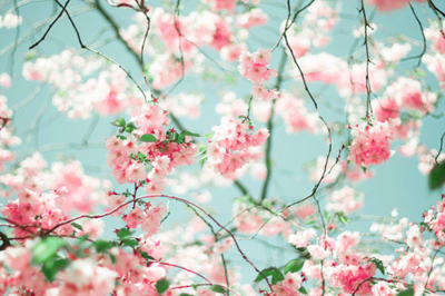 Blossoms-branches-pink-favim.com-214154_large