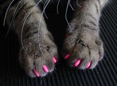 Unhas-de-gata-pink_large