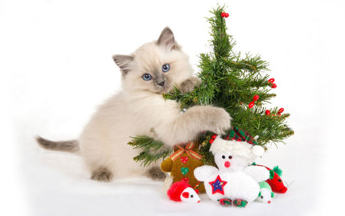 Cat-with-christmas-tree-wallpapers_large