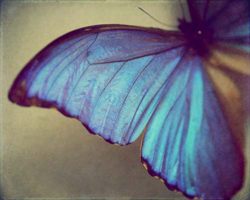 Animals_butterfly_he_gave_me_wings_photography_wing_beauty-c16ba0f5388d48cedf13ef6fcba06187_h_large