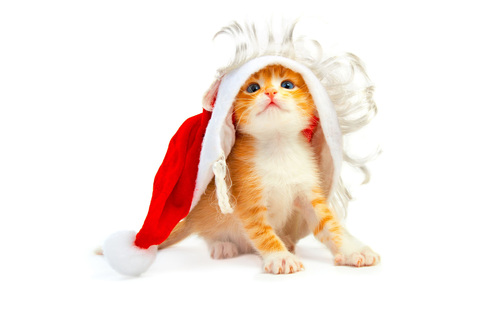 Cat_funny_santa_hat_2560x1600_large