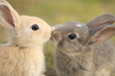 Adorable-brown-eyes-bunny-couple-in-love-favim.com-222029_large