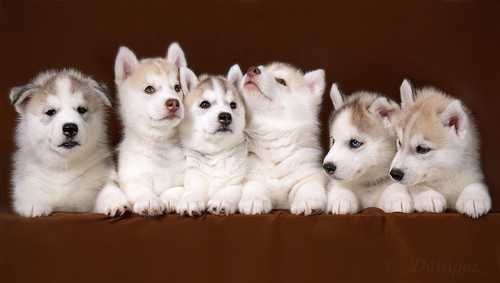 Six_kids_by_deingel_dog_stock-d4i54d1_large