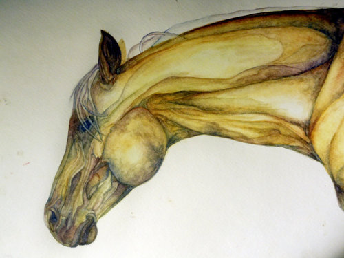 Watercolor_horse_by_neonpony15-d49hk2z_large