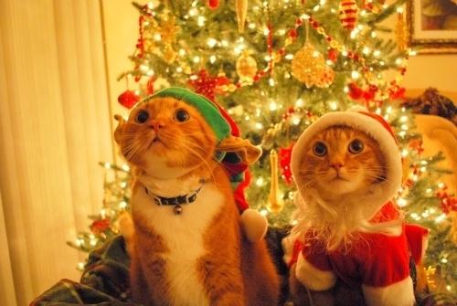 Gatos-prontos-pro-natal_large