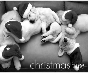 puppy dog christmas love