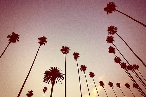 Palm-trees-we-heart-it1_large