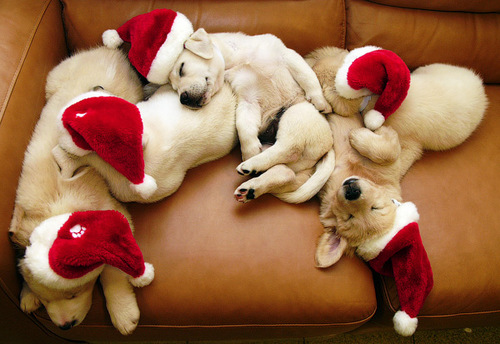 Sleeping-santa-dogs_large