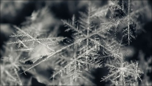 snowflakes-macro-photo-creative-snow-macro-snowflalkes-beauty-christmas-Merry-Christmas-N-Happy-New-Year_large_large.jpg