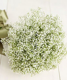 Baby-breath-flower-2_300_large