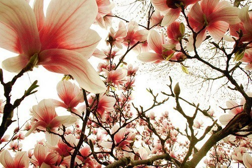 Magnolia Lomo by ~tch on deviantART picture on VisualizeUs